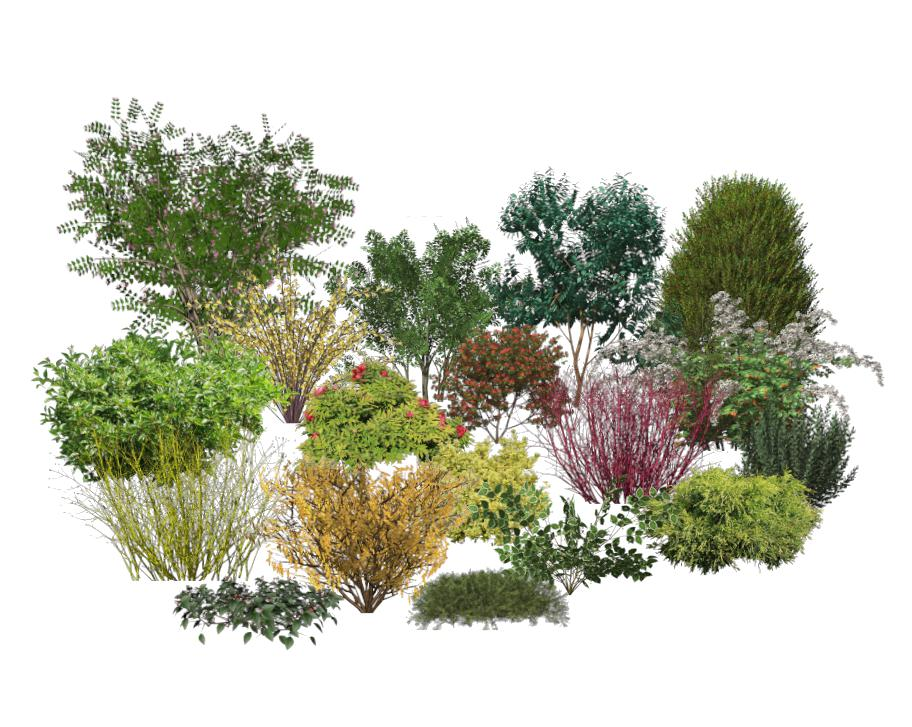 plants shrubs catalog details