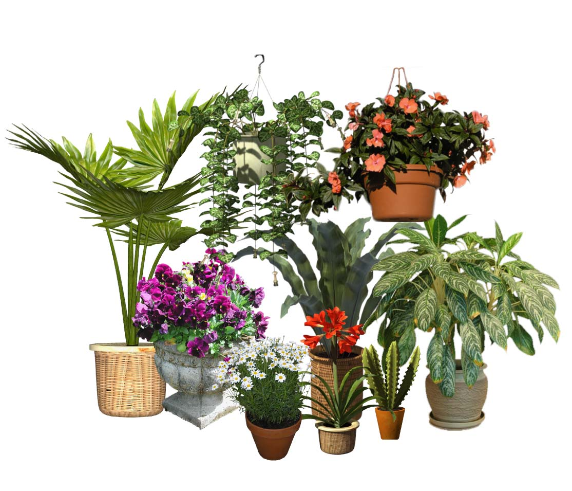 Potted plants catalog details for Plant nursery